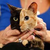 【動画あり】2つの顔を持つ猫!(グロじゃないよ)