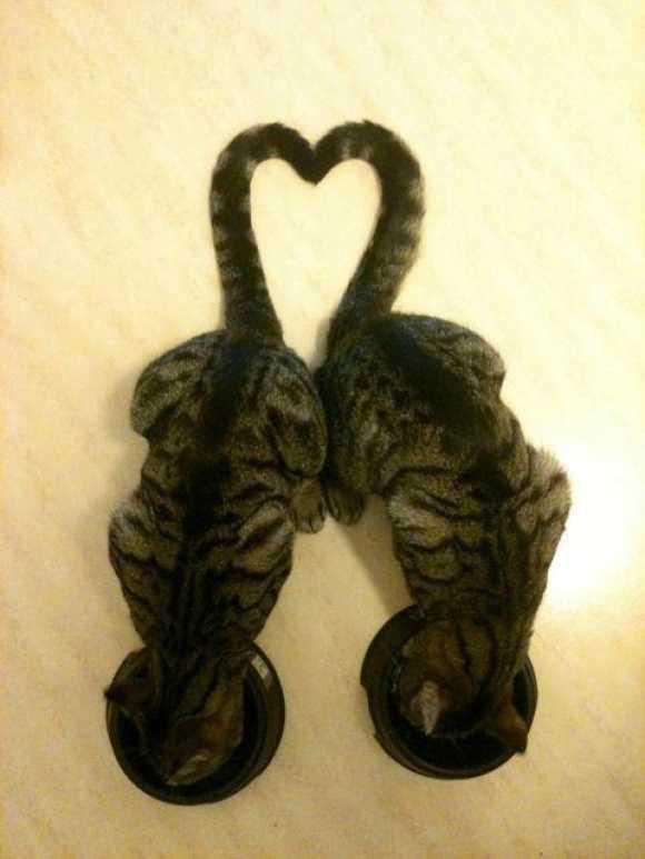 【画像】しっぽがハートになっちゃった猫が可愛い!