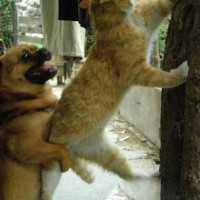 【画像】猫「ちょっと手伝って!」犬「よしきた!」