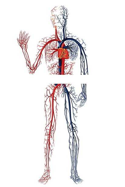 人間の血管をイメージした独創的なスツール