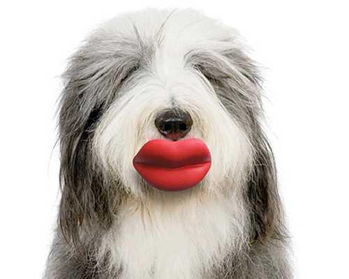 咥えただけでウナギ犬!犬の玩具「Dog Lips」を咥えたワンコ画像まとめ