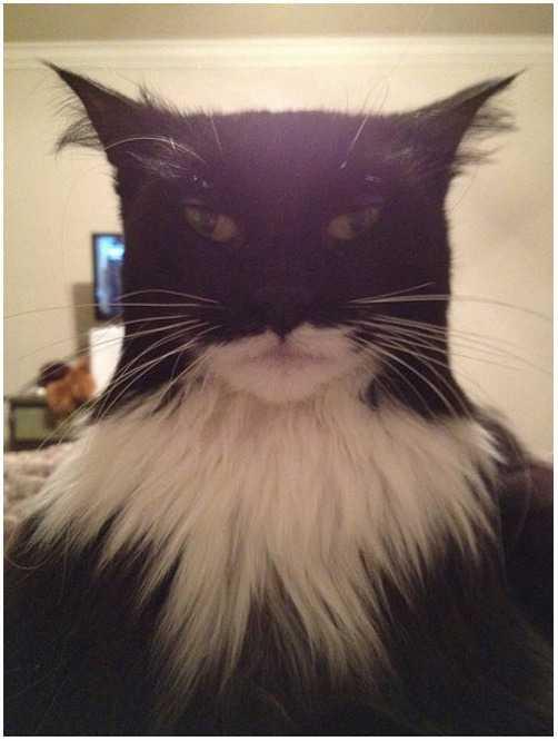 バットマンにそっくりな猫