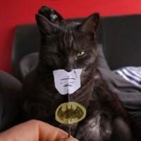 どんな黒猫でもバットマンになれる画期的な器具