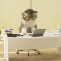 【おもしろ動画】自分の会社の社員が全員「子猫」だったら