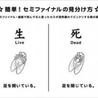 【小ネタ】道端に転がっているセミの生死確認「セミファイナルの見分け方」