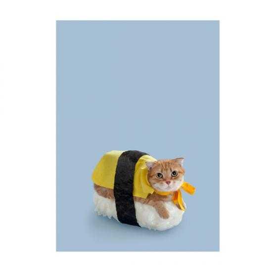【密かにブーム!?】寿司と猫の奇跡の融合「ネコずし」とは