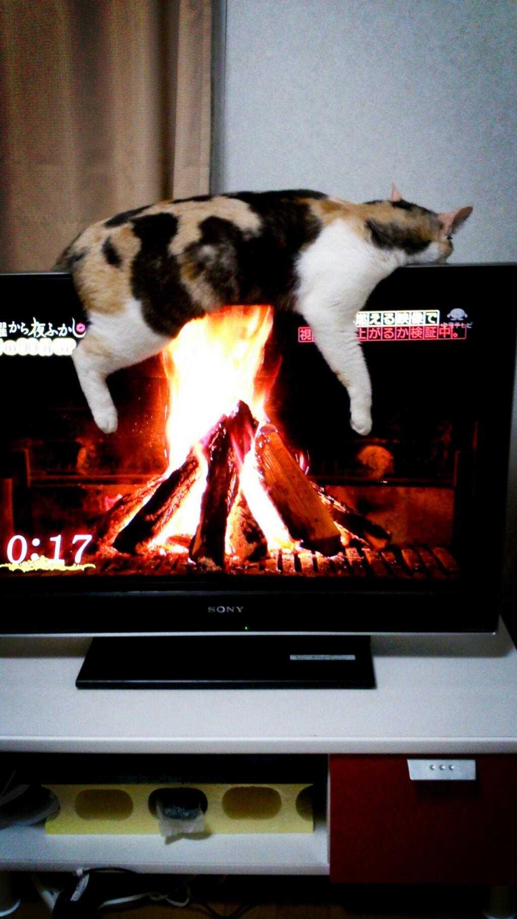 【小ネタ】猫の丸焼き