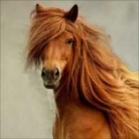 【写真】思わず見惚れてしまうイケメンすぎる馬の写真まとめ