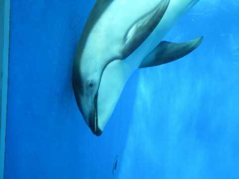 【動画】弘法も筆の誤り「イルカの珍しい失敗」