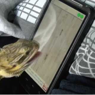 【おもしろ動画】スマホで虫取りゲームをするトカゲ