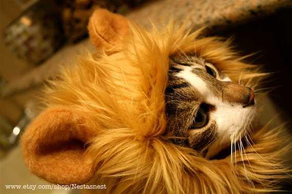 猫があっという間にライオンに!猫用帽子「Lion Hat for Cats」