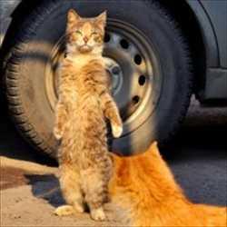 【小ネタ】 猫「・・・あ、あれは究極の構え・・・!!」