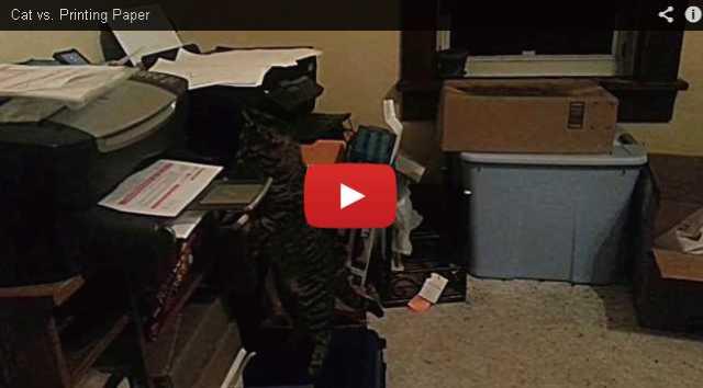 【動画】プリンターから出てくる紙を回収してくれる猫