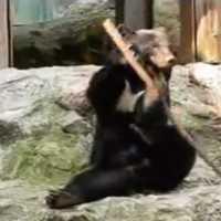 【動画】なんでもクルクル回しちゃう!カンフー熊の「クラウド君」