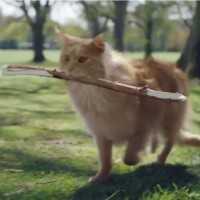 【動画】猫っぽい遊びは完全スルー、犬の遊びを楽しむハイテンションな猫