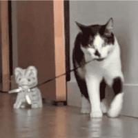 【小ネタ】猫の玩具を散歩させる猫が可愛くてたまらん!