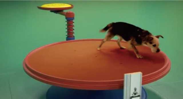 【動画】犬を使ったピタゴラスイッチが可愛い!![ドッグフードのCM]
