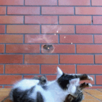 【小ネタ】危機一髪!捨て身で銃弾から子猫を守れ!!