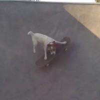 【動画】ハーフパイプもお手の物!スケボーがめちゃくちゃ上手い犬