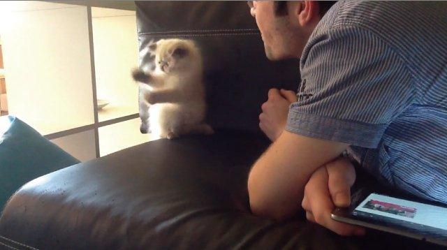【動画】飼い主の吹きかける息と戦うモサモサの子猫