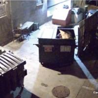 【動画】レストランの監視カメラ捉えた意外な犯人によるゴミ泥棒の瞬間