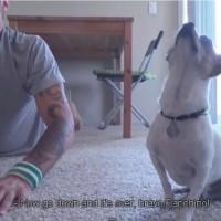 【動画】飼い主の動きに合わせてヨガをする犬が超カワイイ!
