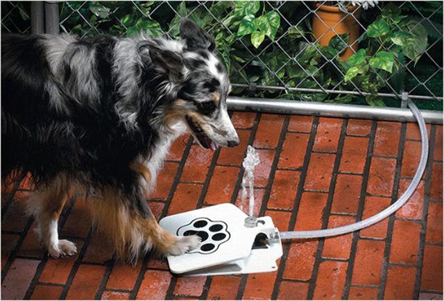 これいいな!犬が自らペダルを踏むことで水が噴水のように出てくる装置「Doggie Fountain」