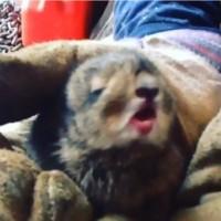 【動画】可愛すぎて悶絶した!モフモフの赤ちゃんウサギのくしゃみ