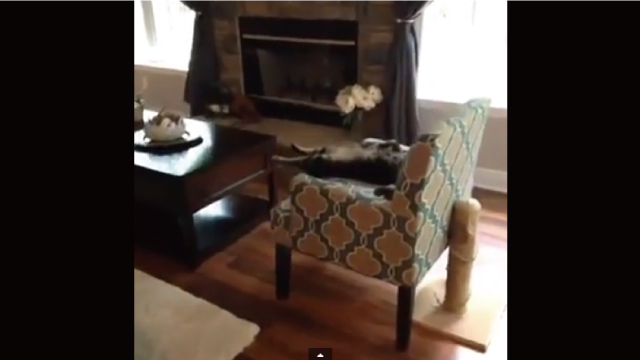 【小ネタ】ソファーで超くつろいでいる猫