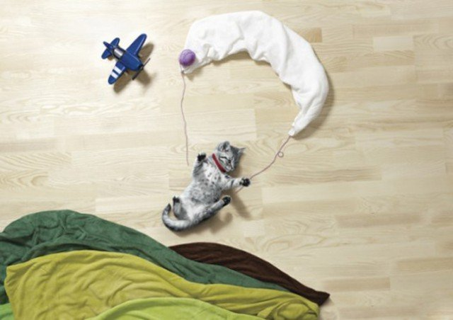 チェコ人が撮影した寝相アートのペット版がカワイイ!