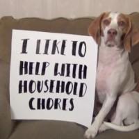 【動画】イタズラ好きな犬が自らイタズラを紹介していく動画が可愛い