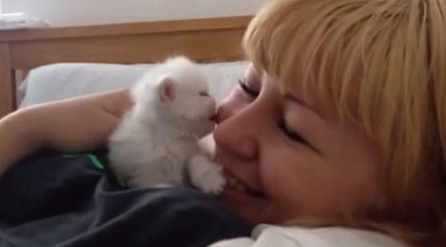 【動画】子猫が顔にキスしまくってくる動画が可愛すぎる!