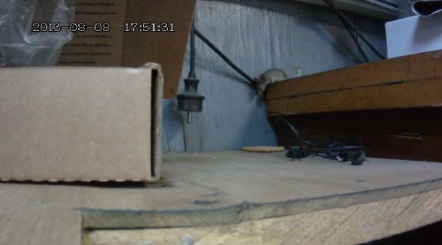 【動画】ワーナーのアニメっぽいwww「クラッカー vs 泥棒ネズミ」