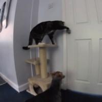 【動画】犬の為にノブを回してドアを開けてあげる親切な猫