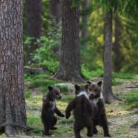 【小ネタ】3匹の子熊が森で何らかの儀式を執り行っている様子