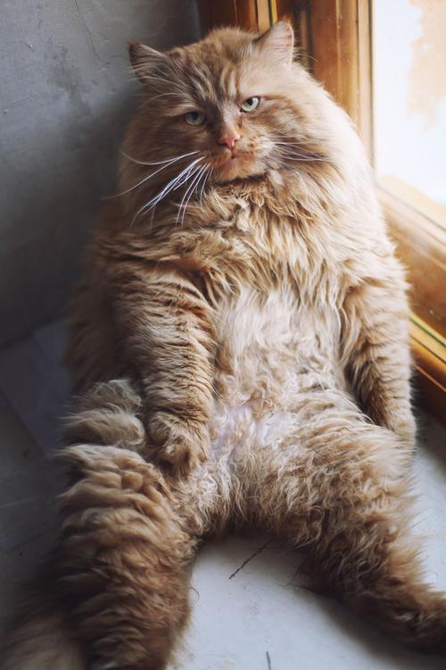 【小ネタ】なんだこの猫!!モサモサで迫力あり過ぎwww