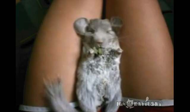 【動画】ご飯をむしゃむしゃ食べながら寝ちゃうネズミが可愛いwww