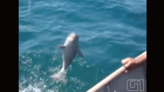 【動画】赤ちゃんイルカを救出したらお礼を言って海に帰って行った!