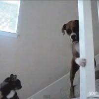 【動画】「猫が怖くて道を通れない情けない犬」特集