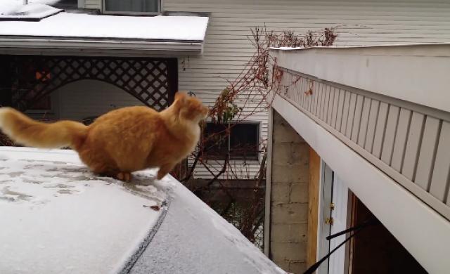 【動画】車の上から屋根に飛び移ろうする猫が雪で滑って失敗しちゃうハプニング