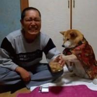 【動画】お酒を呑もうとすると必死に止めてくる柴犬のマリちゃんが超可愛い!!