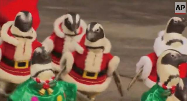 韓国の動物園でサンタに扮したペンギンのパレードが開催されて話題に