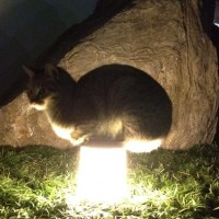 【小ネタ】「近所の猫が斬新な暖の取りかたをしていた」とTwitterで話題に