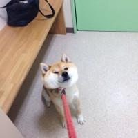 【小ネタ】「危険を察知して一歩も動かくなった犬が可愛い」とTwitterで話題に
