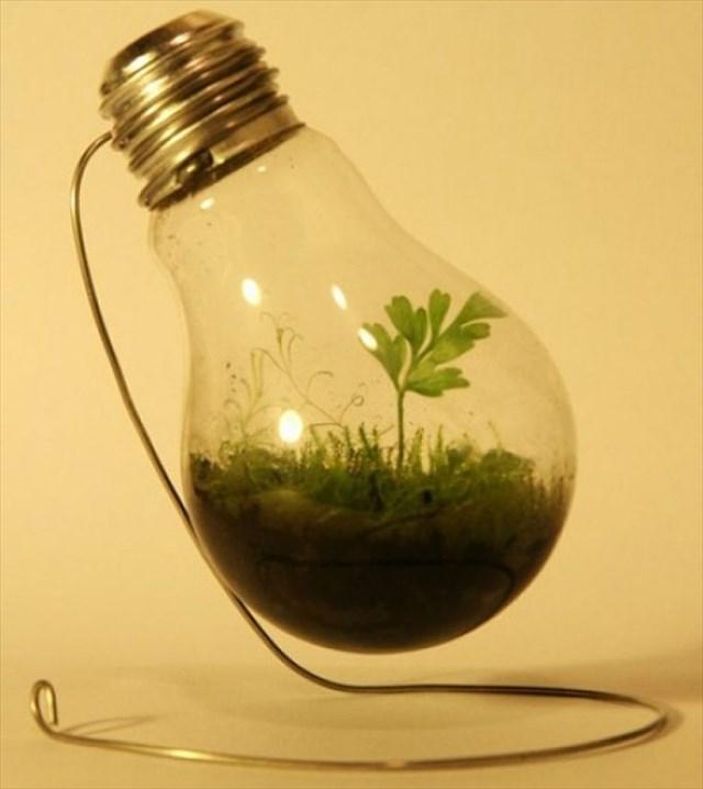 【DIY】古くなった電球をテラリウムや花瓶にリメイクする方法