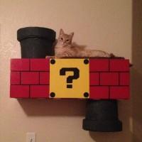 ワープゾーンもある!スーパーマリオ風の自作キャットハウスで猫歓喜!