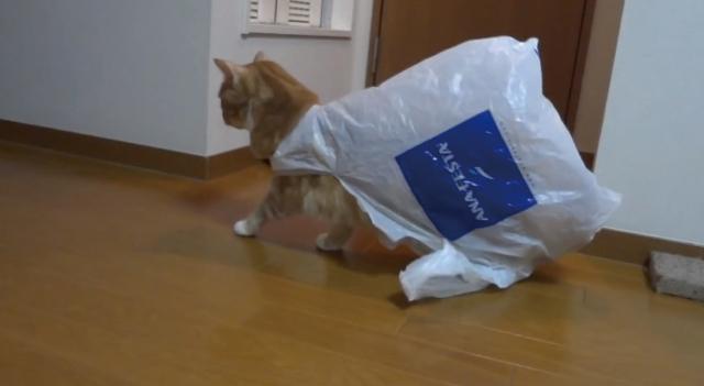 【あるある】猫がビニール袋で遊んでいたら高確率で陥る現象