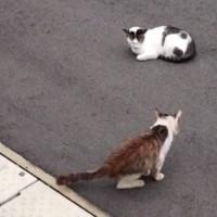 いじめられっ子の新参猫に友達ができる瞬間を収めたドキュメント「猫が友達になる瞬間」