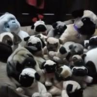 【動画】この中に本物の犬が隠れています、さてどこでしょう?