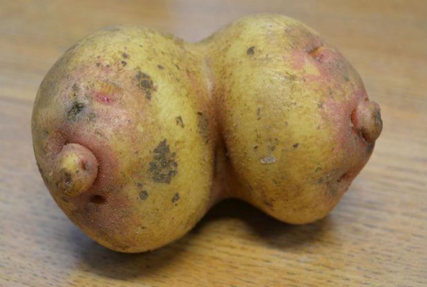 イングランドで物凄くおっぱいっぽいジャガイモが発見され話題に